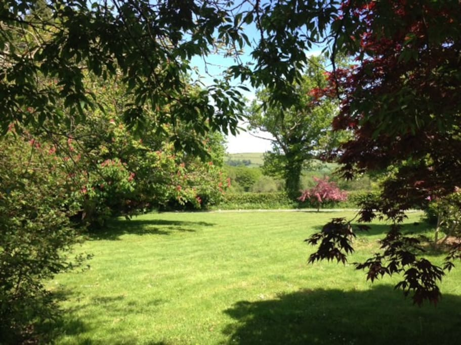More of our leafy garden and lawns