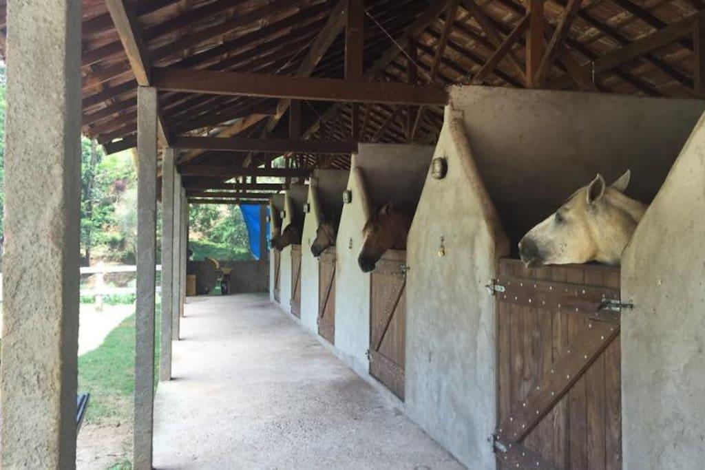 Baias dos cavalos
