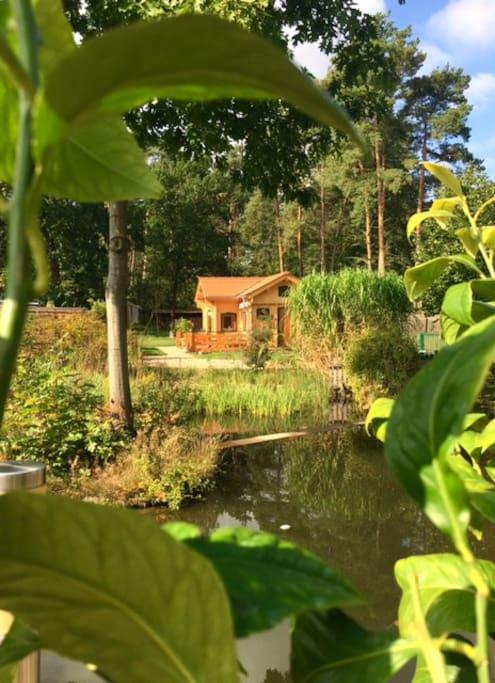 Blick über den Gartenteich