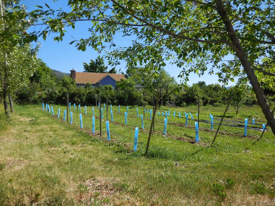 The lower field with new vines