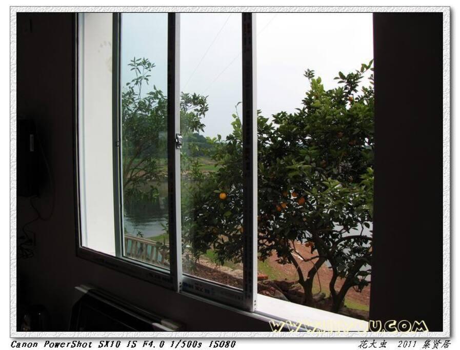 窗外果树成林