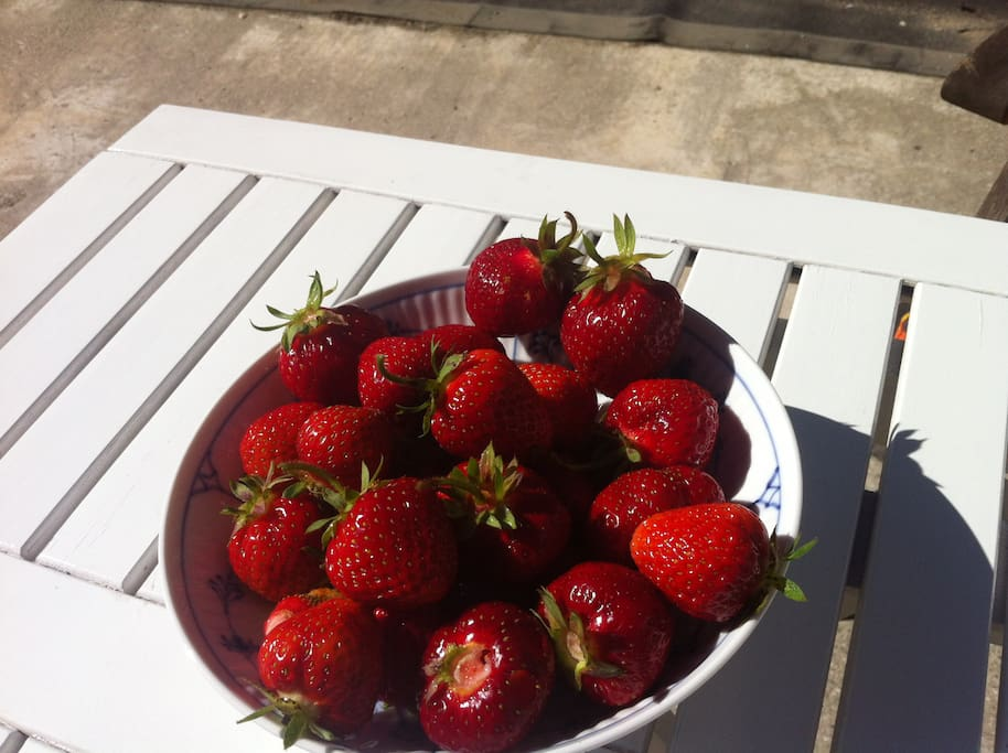 Home grown vegetable garden strawberries right now. These are the berries your jam is made of. Super quality.