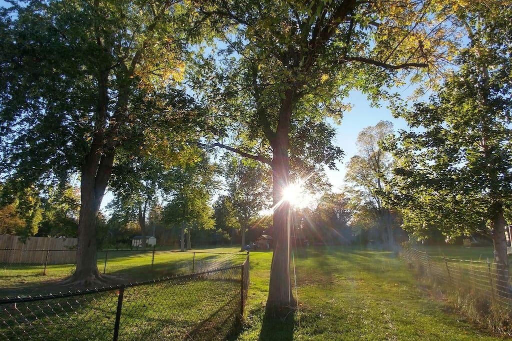 Gorgeous sunny backyard