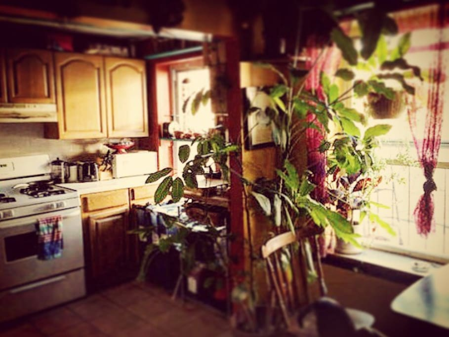 Shared kitchen with full cooking supplies and fresh potted herbs.